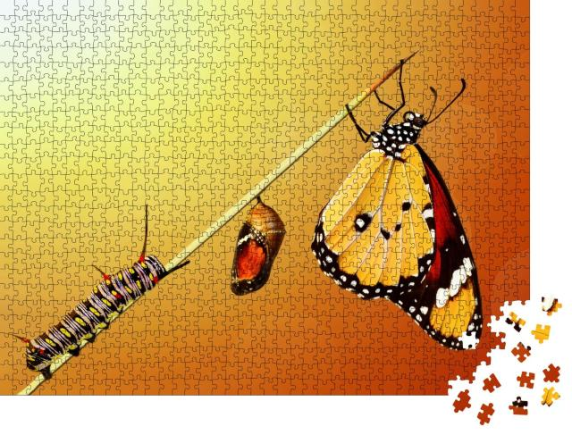 """Puzzle 1000 Teile """"Die Transformation eines Schmetterlings"""""""