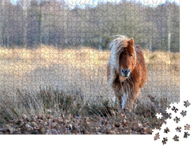 """Puzzle 1000 Teile """"Wunderschönes Pony"""""""
