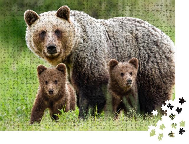 """Puzzle 1000 Teile """"Beschützendes Braunbärenweibchen: Tierfamilie mit zwei Jungen"""""""