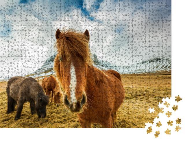 """Puzzle 1000 Teile """"Pferde in den Bergen von Island"""""""