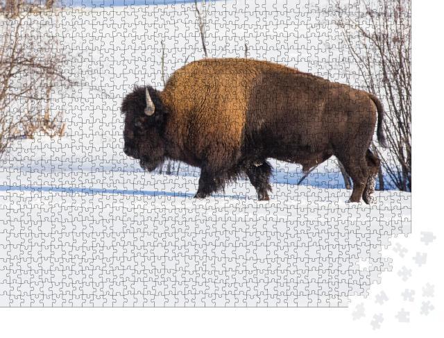 """Puzzle 1000 Teile """"Amerikanischer Bison inmitten der Winterlandschaft"""""""