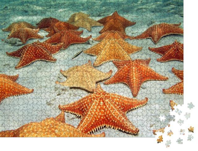 """Puzzle 1000 Teile """"Seesterne auf dem sandigen Meeresboden"""""""