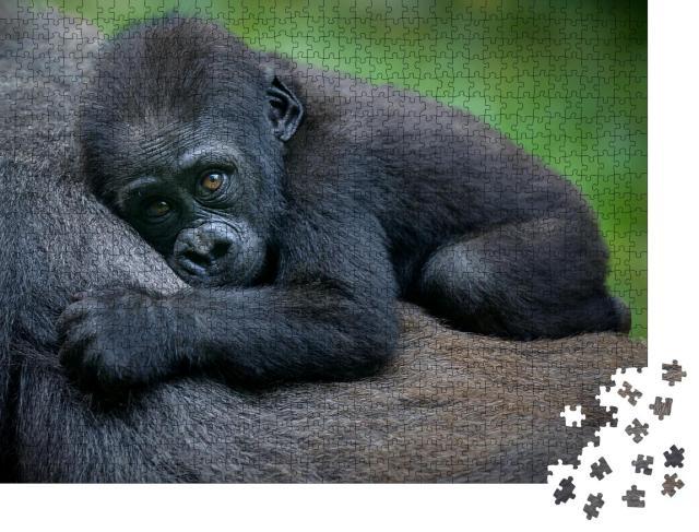 """Puzzle 1000 Teile """"Ein Gorillababy"""""""