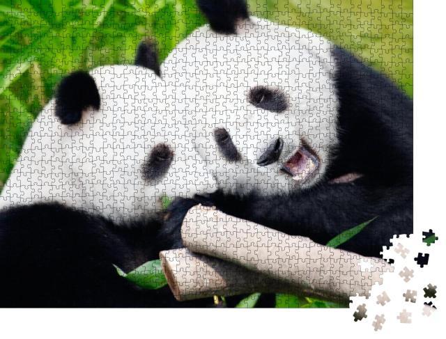 """Puzzle 1000 Teile """"Niedliche Riesenpandas beim Verzehr vonBambussprossen"""""""
