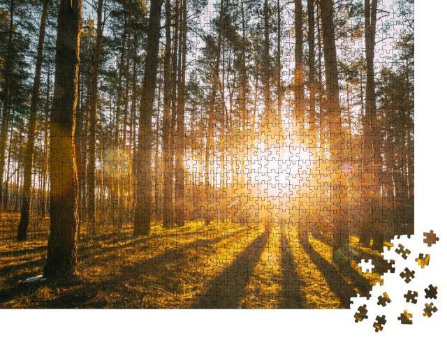 """Puzzle 1000 Teile """"Sonnenstrahlen im Wald"""""""