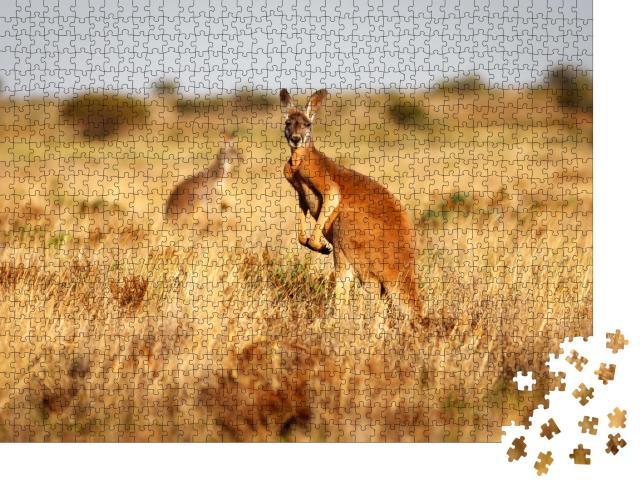 """Puzzle 1000 Teile """"Rotes Känguru im Grasland des australischen Outbacks"""""""