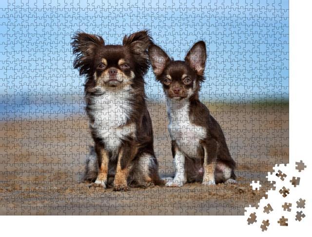 """Puzzle 1000 Teile """"Chihuahua und Welpe draußen"""""""