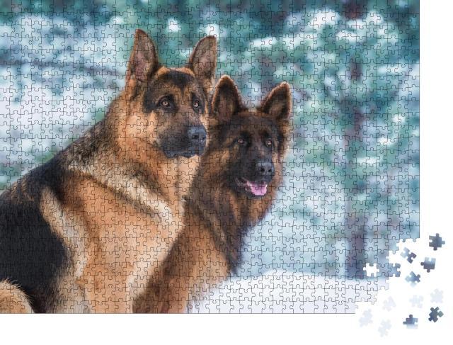 """Puzzle 1000 Teile """"Porträt von zwei Deutschen Schäferhunden im Winter, schauen aufmerksam"""""""