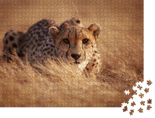 """Puzzle 1000 Teile """"Gepard, bereit zum Sprung"""""""