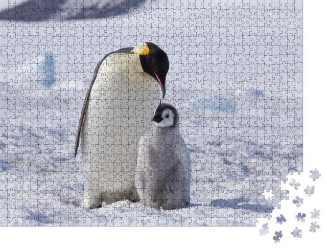 """Puzzle 1000 Teile """"Ein Kaiserpinguin mit seinem Küken, Antarktis"""""""