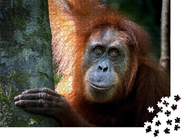 "Puzzle 1000 Teile ""Porträt des berühmten und bedrohten Sumatra-Orang-Utans"""