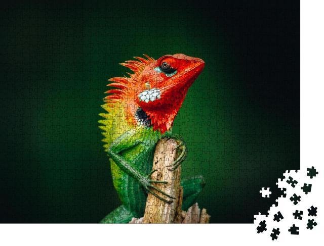 """Puzzle 1000 Teile """"Gewöhnliche grüne Waldeidechse, oranger Kopf"""""""