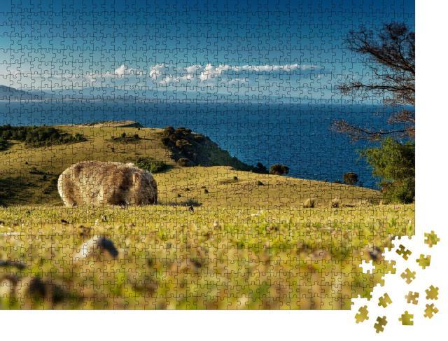 """Puzzle 1000 Teile """"Maria Island, Tasmanien: Ein Wombat sucht Nahrung, hinter ihm die Küste"""""""