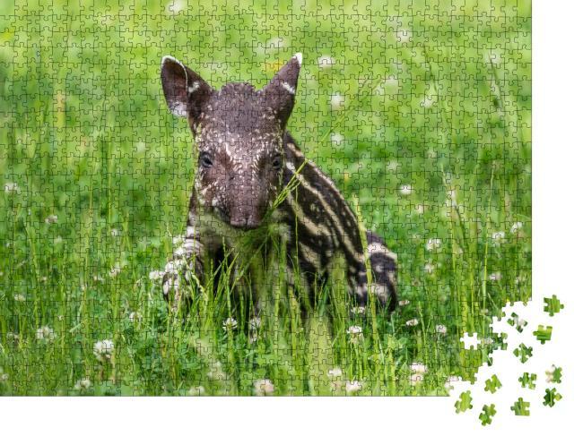 """Puzzle 1000 Teile """"Neun Tage altes Baby des vom Aussterben bedrohten südamerikanischen Tapirs"""""""