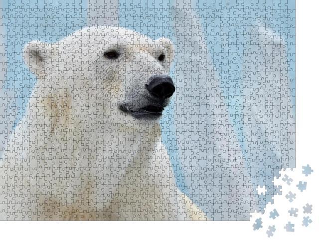"""Puzzle 1000 Teile """"Porträt eines Eisbären auf blauem Hintergrund."""""""