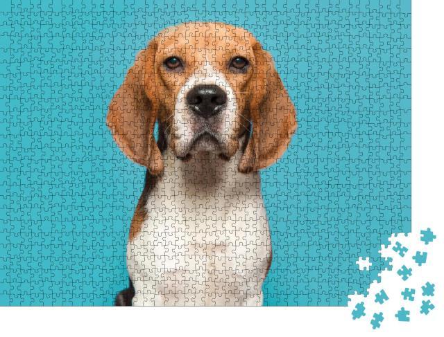 """Puzzle 1000 Teile """"Porträt eines Beagles"""""""