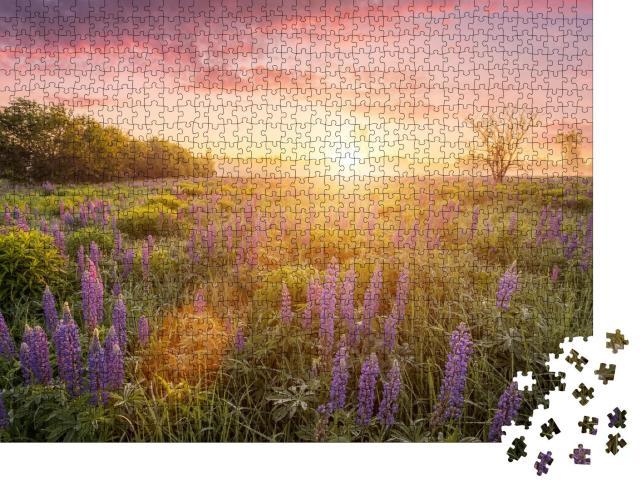 """Puzzle 1000 Teile """"Erste Sonnenstrahlen über einer Wiese mit blühenden Lupinen"""""""