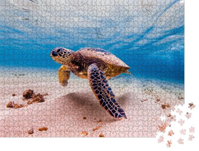 """Puzzle 1000 Teile """"Grüne Meeresschildkröte, Hawaii, seltenes Tier"""""""