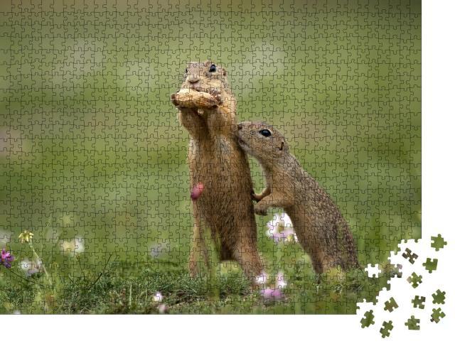 """Puzzle 1000 Teile """" Erdhörnchen in der Nähe auf einer Sommerwiese mit Gras"""""""