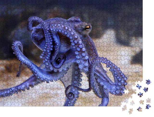 """Puzzle 1000 Teile """"Blauer Oktopus in einem Aquarium, Saugnäpfe, Nahaufnahme"""""""