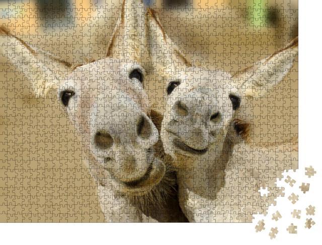 """Puzzle 1000 Teile """"Zwei cremefarbene Esel posieren mit einem glücklichen Lächeln"""""""