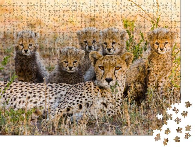 """Puzzle 1000 Teile """"Gepardenmutter und ihre Jungtiere in der Savanne, Kenia"""""""