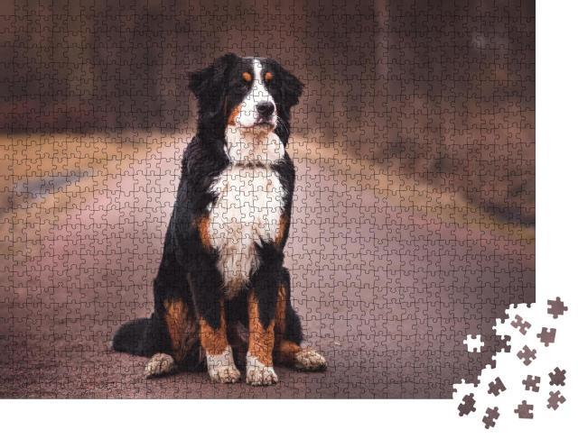 """Puzzle 1000 Teile """"Berner Sennenhund sitzend auf der Straße"""""""