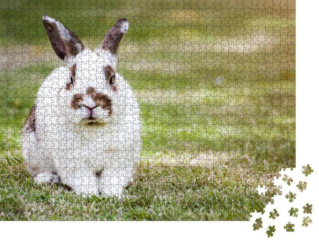 """Puzzle 1000 Teile """"Süßes geflecktes Kaninchen auf grünem Gras"""""""