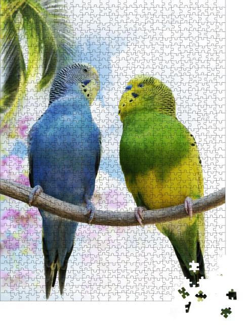 """Puzzle 1000 Teile """"Zwei Wellensittiche auf einem Zweig, im Hintergrund ist eine Palme zu sehen"""""""