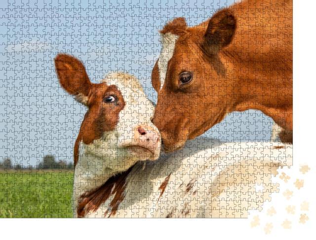 """Puzzle 1000 Teile """"Kuh und Kälbchen"""""""
