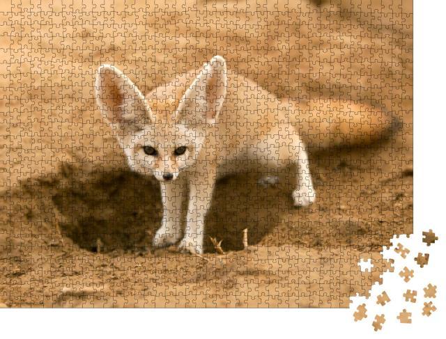 """Puzzle 1000 Teile """"Fennek-Fuchs auf der Hut"""""""