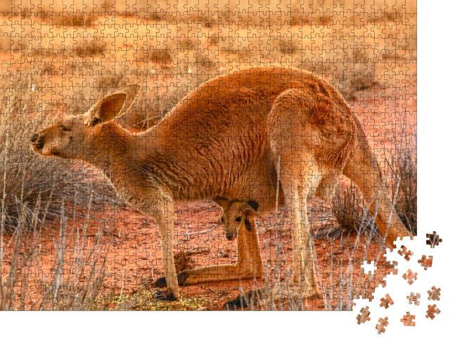 """Puzzle 1000 Teile """"Känguru-Muttertier mit Jungtier im roten Sand des Outbacks von Zentralaustralien"""""""