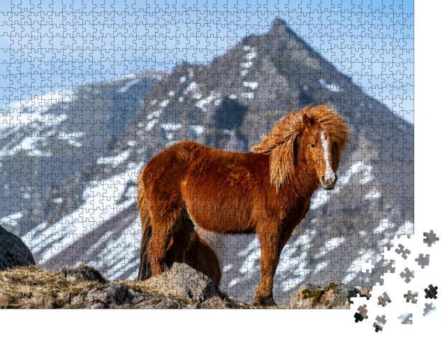 """Puzzle 1000 Teile """"Island-Pferd"""""""