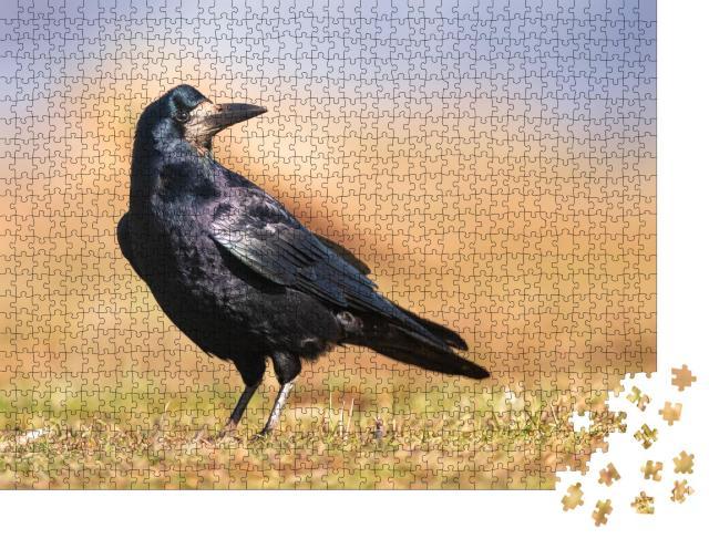 """Puzzle 1000 Teile """"Schwarz glänzendes Gefieder: Eine Saatkrähe"""""""