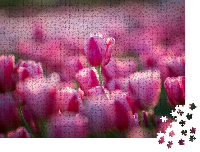 """Puzzle 1000 Teile """"Rosa Tulpen auf dem Feld"""""""
