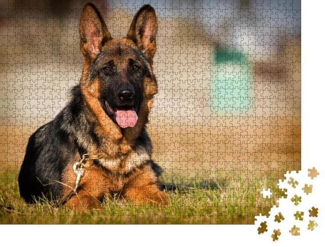 """Puzzle 1000 Teile """"Deutscher-Schäferhund-Welpe, Alter fünf Monate, liegt im Gras"""""""