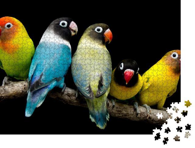 """Puzzle 1000 Teile """"Lovebird: Papagei mit prächtigen Farben"""""""