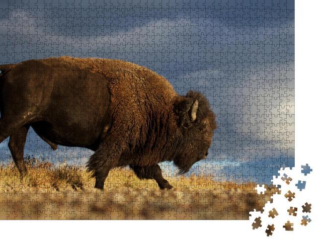"""Puzzle 1000 Teile """"Amerikanischer Bison alias Büffel vor dramatischem Himmel der Prärie, Montana"""""""
