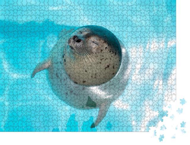 """Puzzle 1000 Teile """"Seehundbaby, entspannt im Wasser"""""""
