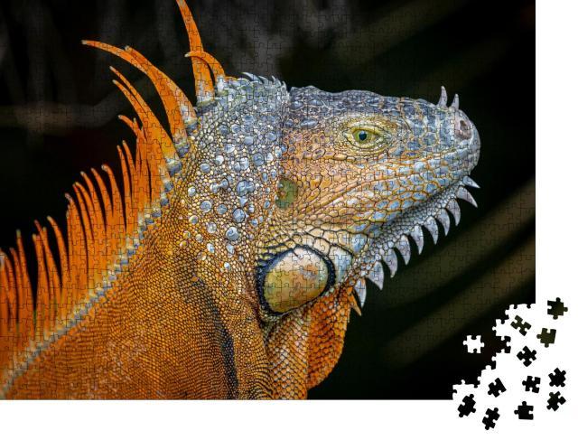 """Puzzle 1000 Teile """"Orangefarbene Morphe eines ausgewachsenen Grünen Leguans"""""""