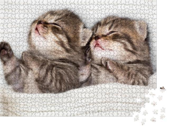 """Puzzle 1000 Teile """"Zwei schlafende Babykätzchen"""""""