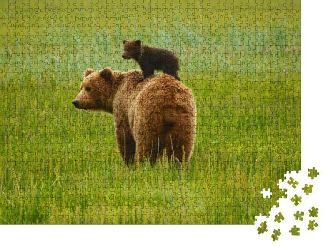 """Puzzle 1000 Teile """"Küsten-Braunbären: Mutter und Jungtier"""""""