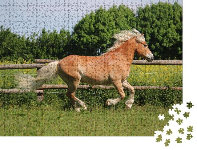 """Puzzle 1000 Teile """"Wunderschönes Haflingerpferd auf der Koppel"""""""