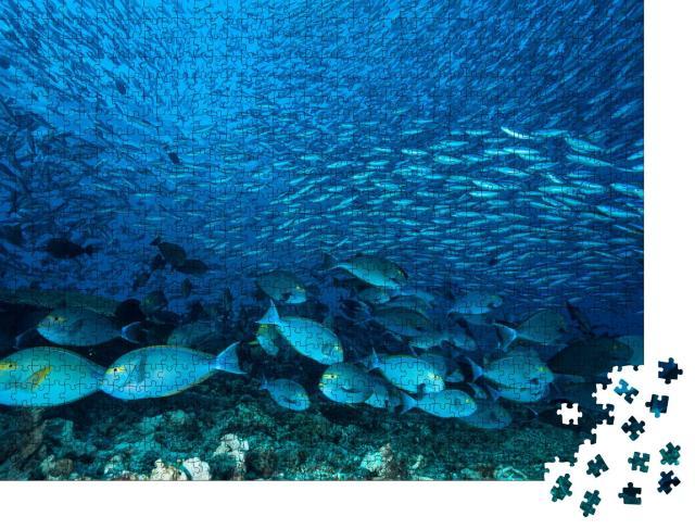 """Puzzle 1000 Teile """"Riesiger Schwarm blauer Doktorfische am Riff"""""""