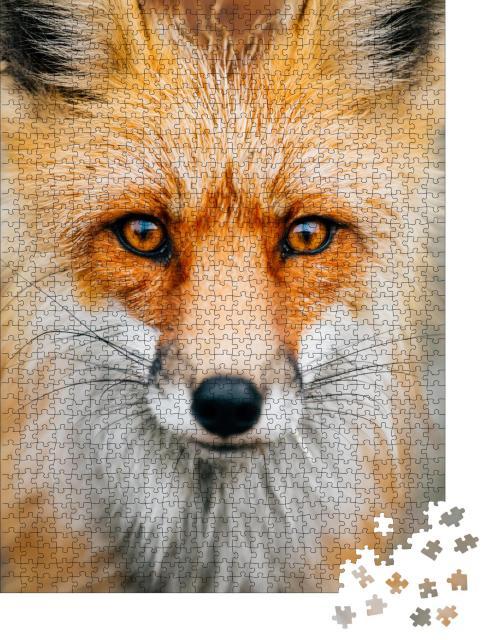 """Puzzle 1000 Teile """"Nahaufnahme: aufmerksamer kleiner Wildfuchs"""""""