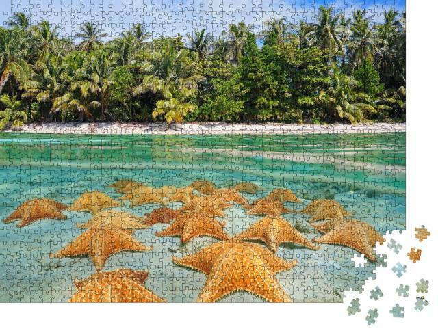 """Puzzle 1000 Teile """"Unter und über Wasser: Eine Gruppe Seesterne am karibischen Strand"""""""