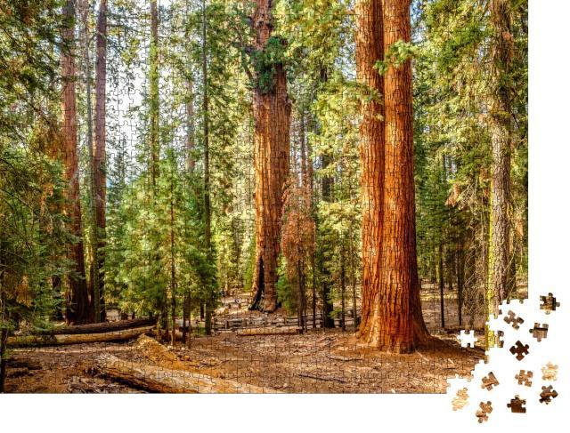 """Puzzle 1000 Teile """"Sequoia National Park im Herbst, Kalifornien, USA"""""""