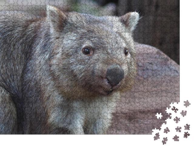 """Puzzle 1000 Teile """"Wombat, heimisch in Australien"""""""