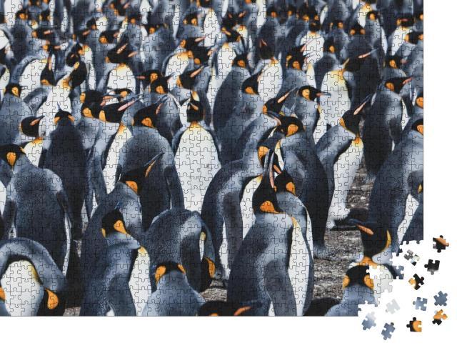 """Puzzle 1000 Teile """"Große Kolonie von Königspinguinen auf den Falklandinseln"""""""