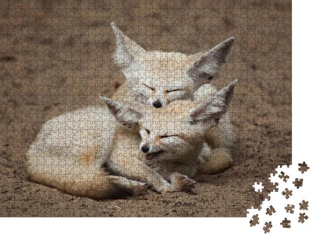 """Puzzle 1000 Teile """"Fennek-Füchse bei einer kleinen Pause"""""""